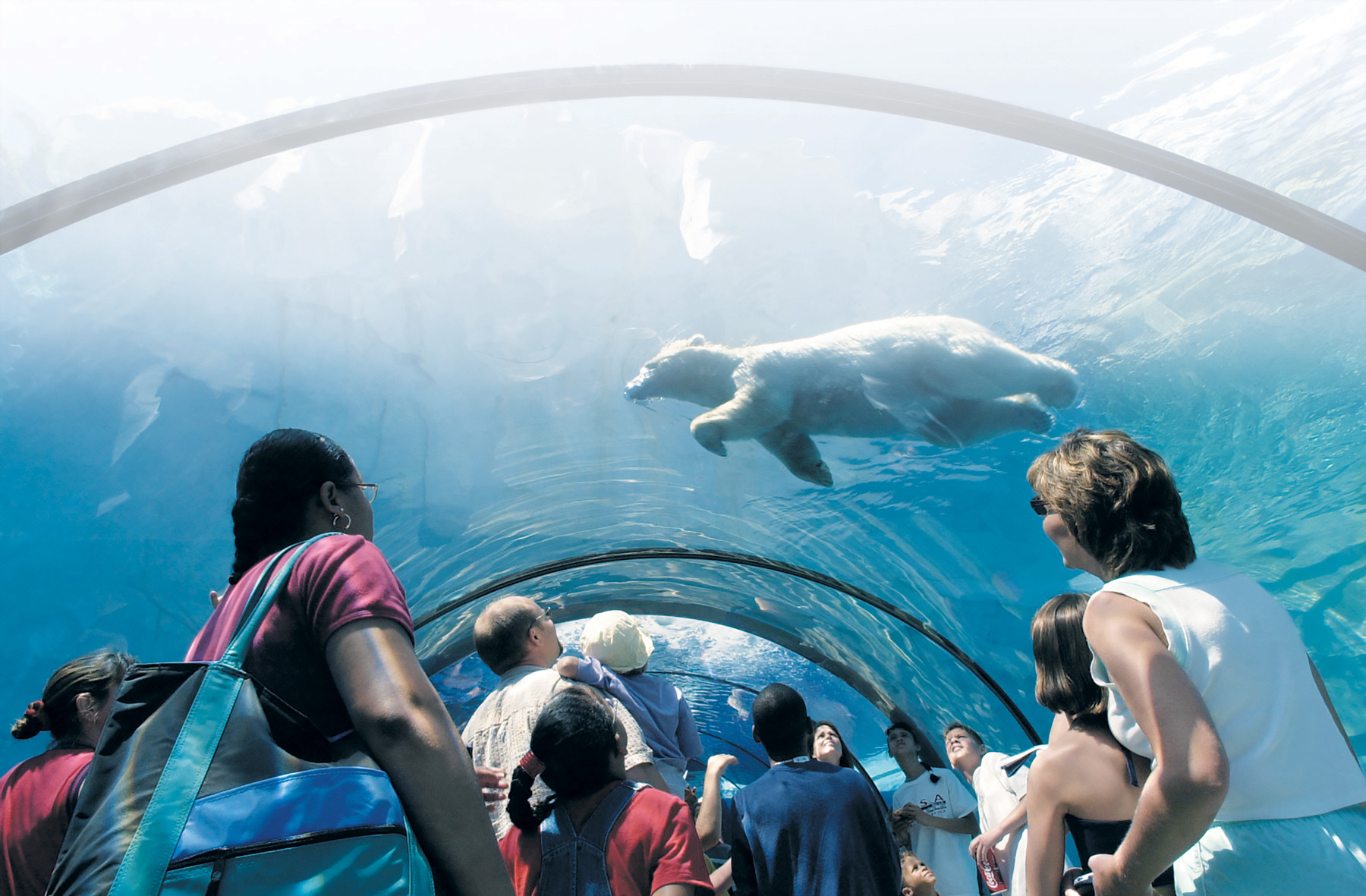 Visitors and bear in the zoo's Polar Passage in the Arctic Ring of Life facility PHOTO: Donna Terek, Detroit Zoological Society
